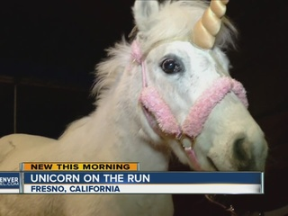 Runaway_unicorn_leads_California_police__0_32614369_ver1.0_320_240